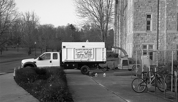 Tree Removal at Virginia Tech's Davidson Hall image